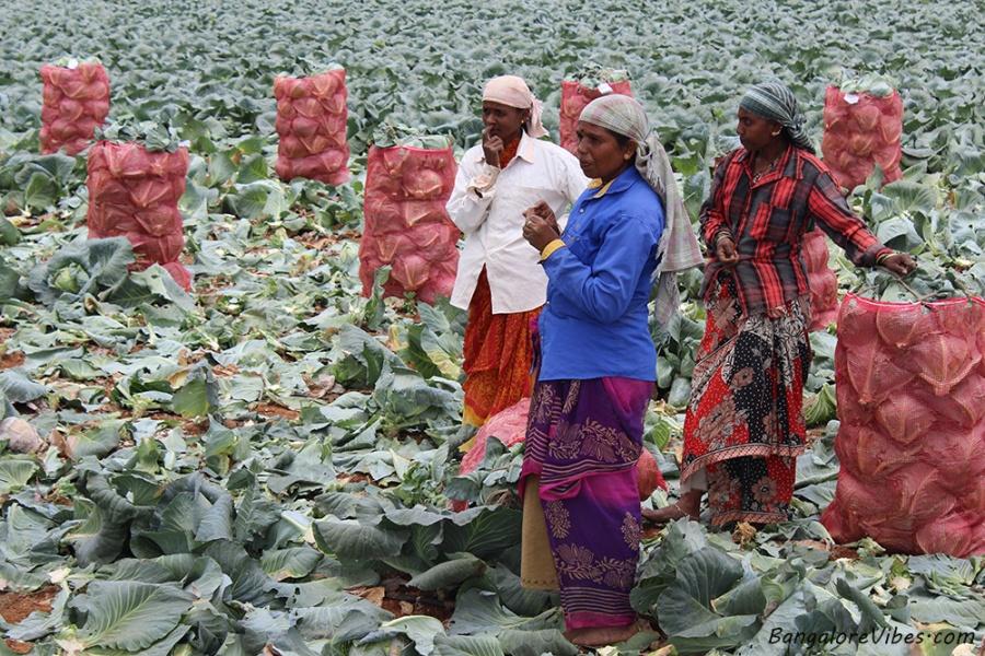 Women in farm