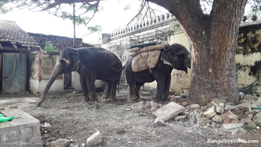 Palace Elephants